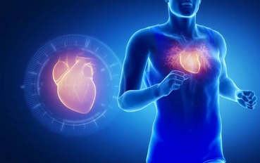 Pengertian Otot Jantung : Ciri, Fungsi, Struktur Bentuk