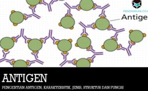 Pengertian atau Bagian Antigen dan Antibodi Pada Tubuh